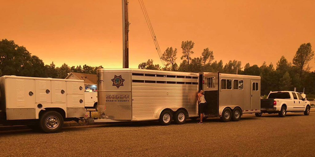 Carr Fire Animal Rescue